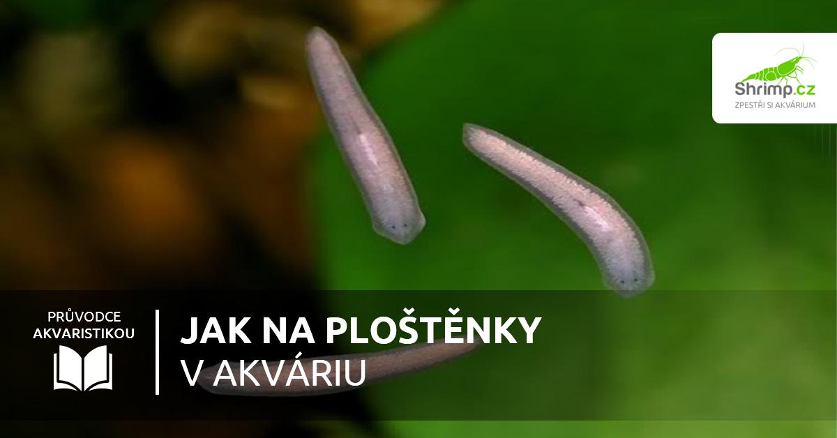 paraziti v akvariu din care apar negi pe braț