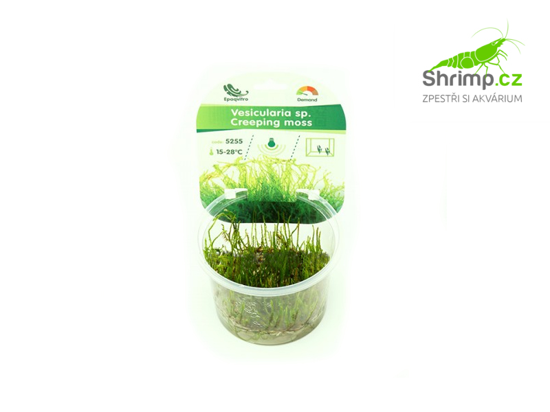 Creeping Moss - Vesicularia sp.- in vitro 100 ml